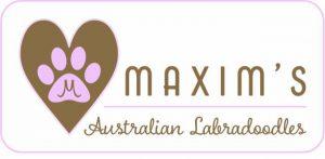 Maxim's Australian Labradoodles